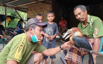 Penyelamatan Burung Endemik Sumba Terdampak Badai Seroja oleh Petugas Balai TN Matalawa